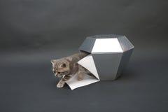 Gullig kattunge med en diamantleksak Arkivbild