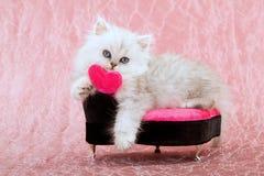 Gullig kattunge med förälskelsehjärta arkivfoton