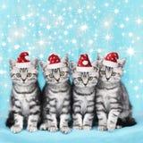 Gullig kattunge med santa den hatsfive gulliga kattungen i rad som ser sid Fotografering för Bildbyråer