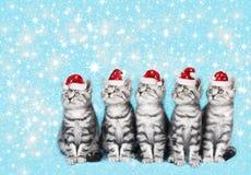 Gullig kattunge med santa den hatsfive gulliga kattungen i rad som ser sid Arkivfoto