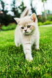 Gullig kattunge på det gröna gräset Arkivfoto