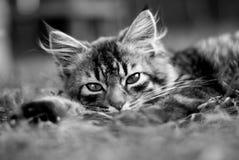 Gullig kattunge på gräset fotografering för bildbyråer
