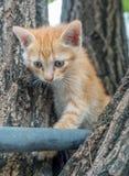 Gullig kattunge på träd Arkivfoton