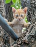 Gullig kattunge på träd Arkivbilder