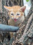 Gullig kattunge på träd Fotografering för Bildbyråer