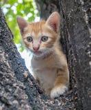 Gullig kattunge på träd Royaltyfria Bilder