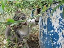 Gullig kattunge som koncentreras till en stor gammal kruka arkivbild
