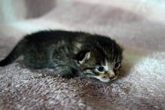 Gullig kattunge som ` s som precis uthärdas för en tid sedan Arkivbild