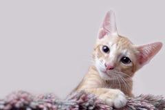 Gullig kattunge som spelar på matta Royaltyfri Bild
