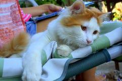 Gullig kattunge som vilar på en soffa Royaltyfria Bilder