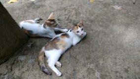 Gullig kattunge två på jordningen royaltyfria foton