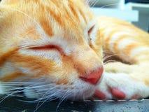 Gullig kattungebakgrund Arkivbild