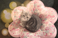 Gullig kattungeframsida Bokeh Arkivfoto