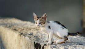 gullig kattungestray Arkivfoto