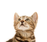 gullig kattungetabby Royaltyfria Foton