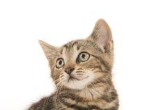 gullig kattungetabby Royaltyfria Bilder