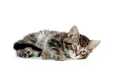 gullig kattungetabbywhite Arkivbild