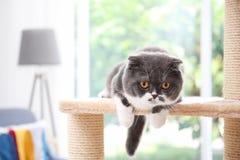 Gullig kisse på kattträd royaltyfri fotografi