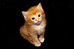 Gullig Kitten-2 Arkivbild