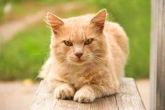 Gullig lantlig katt utomhus Royaltyfri Bild