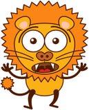 Gullig lejonkänsla som förvånas och skrämmas Arkivbilder