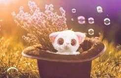 Gullig lemourleksak i en magisk culinderhatt Arkivfoto
