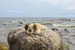 Gullig liten brunt med flott leksaker för vit flott vovve som utomhus sitter på en stor granitsten mot det blåa havet och den blå royaltyfri bild