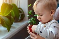 Gullig liten caucasian litet barnpojke med modern som hemma ler och har den roliga innehavkrukan med den planterade blomman n?ra  arkivbilder