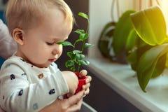 Gullig liten caucasian litet barnpojke med modern som ler och har den roliga innehavkrukan med den planterade blomman nära föns royaltyfri bild