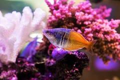 Gullig liten fisk Royaltyfria Bilder