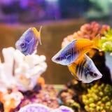 Gullig liten fisk Arkivfoto