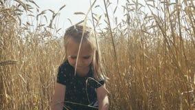 Gullig liten flicka som går till och med vetefält stock video