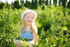 Gullig liten flicka som väljer nya bär på organisk blåbärlantgård på varm och solig sommardag Ny sund organisk mat för royaltyfri foto