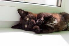 Gullig liten fluffig kattunge royaltyfria bilder