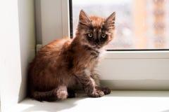 Gullig liten fluffig kattunge arkivbild