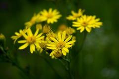 Gullig liten grupp av blommor fotografering för bildbyråer