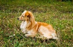 Gullig liten hund arkivbild