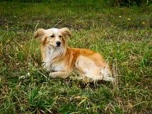 Gullig liten hund royaltyfria bilder