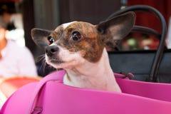 Gullig liten hund i en café Arkivbild