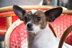 Gullig liten hund i en café Arkivfoton
