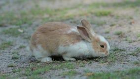 Gullig liten kanin på Grunden lager videofilmer