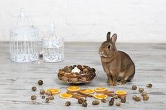 Gullig liten kanin som sitter nära fågelbur Royaltyfri Foto