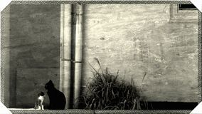 Gullig liten katt och stor katt tillsammans royaltyfria bilder