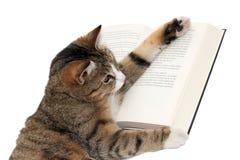 Gullig liten katt som läser en bok Royaltyfri Fotografi