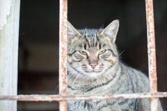 Gullig liten katt som poserar för ett fotografi arkivbilder