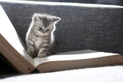 Gullig liten kattunge arkivfoto