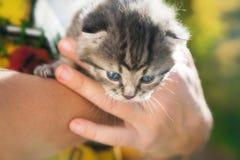 Gullig liten kattunge i ägarehänder royaltyfri foto