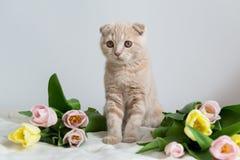 Gullig liten kattunge med blommabuketten kopiera avstånd Baner, ferier, mors dag, valentindag och begrepp för lycklig födelsedag arkivfoto