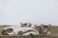 Gullig liten kattunge som tre ser kameran arkivfoton