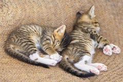Gullig liten kattunge två arkivfoto